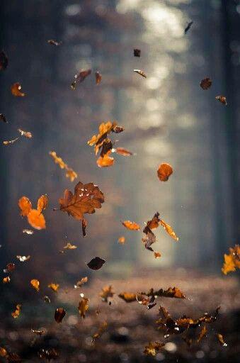 eefphotography | Blog | #herfst #fall #faliing