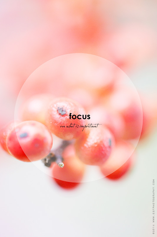 eefphotography.com | blog | focus on what is important #quote #quotes #focus